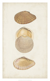 Antiquarian Shell Study I Giclee Print by  Vision Studio