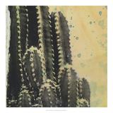 Sueños del desierto IV Lámina giclée por Naomi McCavitt