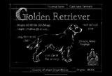 Blueprint Golden Retriever Prints by Ethan Harper