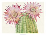 Desert Blossoms II Giclee Print by Tim O'toole
