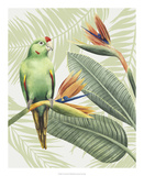 Avian Paradise IV Prints by Grace Popp