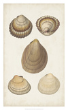 Antiquarian Shell Study III Giclee Print by  Vision Studio