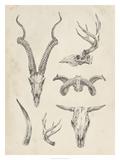 Skull & Antler Study I Giclee Print by Ethan Harper