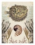 Antiquarian Menagerie - Puffer Fish Giclee Print by Naomi McCavitt