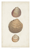 Antiquarian Shell Study IV Giclee Print by  Vision Studio