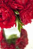 Ranunculus I Photographic Print by Karyn Millet
