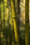 Bamboo Afternoon VII Photographic Print by Rita Crane