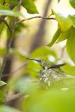 Hummingbird Photographic Print by Karyn Millet