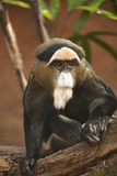 Primate I Photographic Print by Karyn Millet