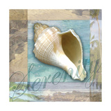 Serenity Shell Art by Todd Williams