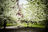 Crabapple in Spring I Photographic Print by Beth Wold