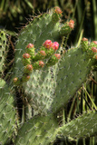 Cactus Flowers II Photographic Print by George Johnson