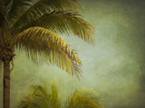 Coconut Palms Photographic Print by Roberta Murray