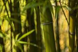 Bamboo Afternoon I Photographic Print by Rita Crane