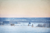 Winter Mule Deer Photographic Print by Roberta Murray