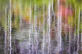 Forest Reflections II Photographic Print by Kathy Mahan