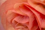 Orange Ruffles VI Photographic Print by Rita Crane