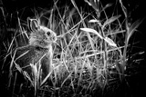 Baby Bunny II Photographic Print by Beth Wold