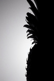 Pineapple Silhouette Reproduction photographique par Monika Burkhart