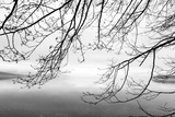 Seabeck Winter II Photographic Print by Kathy Mahan