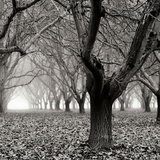Tree Grove BW Sq I Photographic Print by Erin Berzel