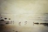 Gulls on a Beach Photographic Print by Roberta Murray