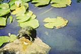 Turtle Pad Fotoprint van Roberta Murray