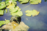 Turtle Pad Photographic Print by Roberta Murray