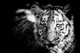 Tiger Cub II Photographic Print by Beth Wold