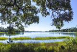 Bradley Creek I Photographic Print by Alan Hausenflock