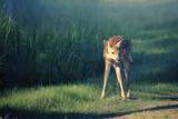 Bambi Photographic Print by Roberta Murray
