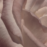Heart of a Rose VII Photographic Print by Rita Crane