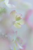 Hydrangea I Photographic Print by Kathy Mahan