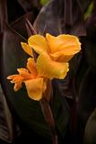 Orange Flower I Photographic Print by George Johnson