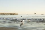 Ocean Pier Photographic Print by Karyn Millet