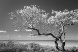 Lone Tree II Photographic Print by Kathy Mahan