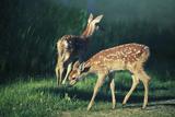 Bambi x 2 Photographic Print by Roberta Murray