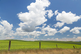 Palouse Farm I Photographic Print by Kathy Mahan