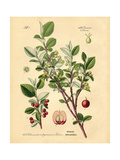 Botanical III Posters by N. Harbick