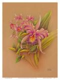 Pink Cattleya Orchid Flower - Hale Pua Studio Hawaii Print by Frank Oda
