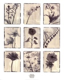 Silk Botanicals Art by Liz Jardine