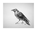 Crow Drawing Photographic Print by Steve Goad