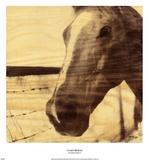 Portrait of a Horse Posters by Casey Mckee