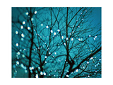 Tree at Night with Lights Posters by Myan Soffia
