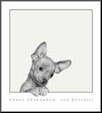 Sweet Chihuahua Mounted Print by Jon Bertelli