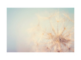 Dandelion Dreams Print by Laura Evans