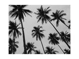 Colima Palms 2 Pôsters por Ed Fladung