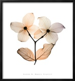 Dogwood I Posters by Steven N. Meyers