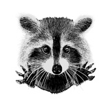 Hand Drawn Raccoon Art by  LViktoria