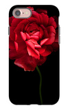 Red Ranunculus iPhone 7 Case by Magda Indigo